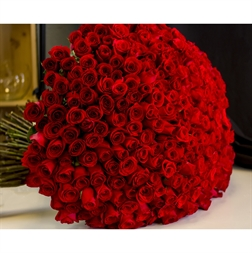 Resim 300 RED ROSE